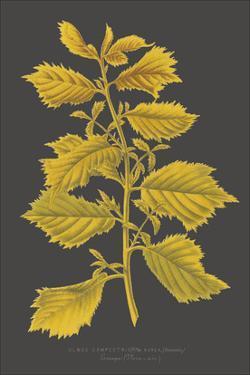 Trees & Leaves V by Vision Studio