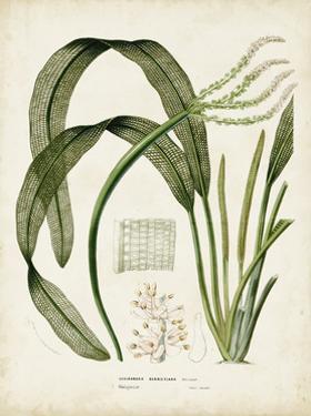 Tropical Grass I by Vision Studio