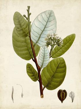 Verdant Foliage I by Vision Studio