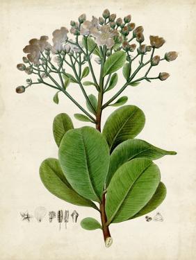 Verdant Foliage VIII by Vision Studio