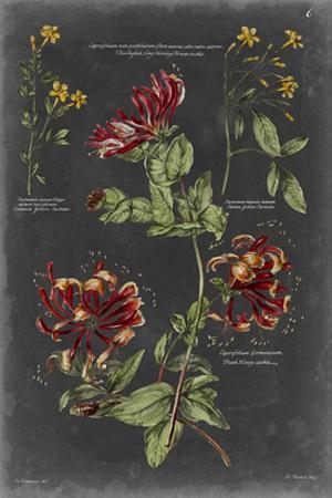 Vintage Botanical Chart II by Vision Studio