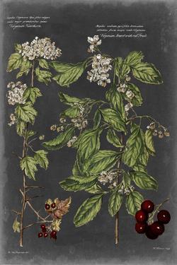 Vintage Botanical Chart VI by Vision Studio