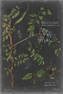 Vintage Botanical Chart VII by Vision Studio
