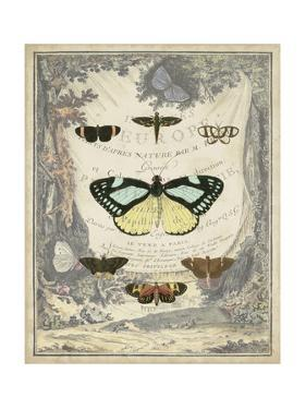 Vintage Butterfly Bookplate by Vision Studio