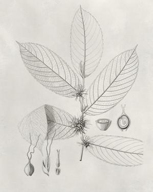 Vintage Leaves II by Vision Studio