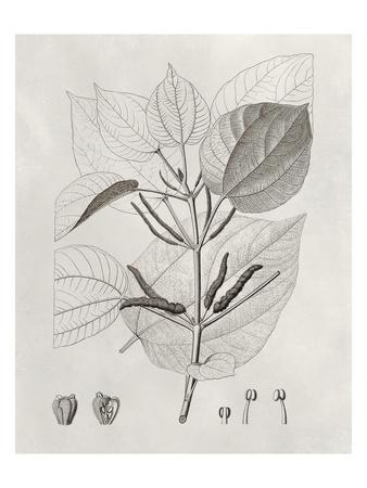 Vintage Leaves III