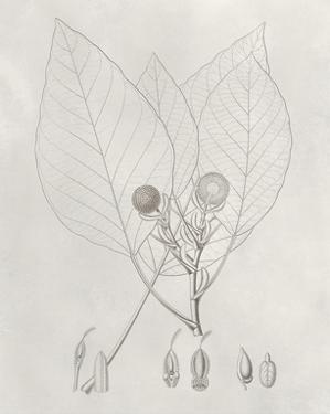 Vintage Leaves V by Vision Studio