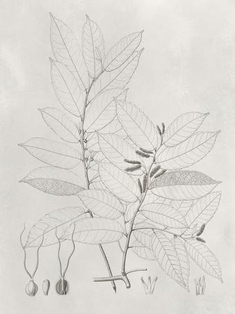 Vintage Leaves VI