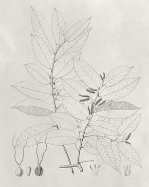 Vintage Leaves VI by Vision Studio