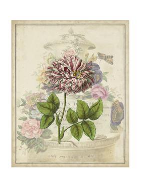 Vintage Rose Bookplate by Vision Studio