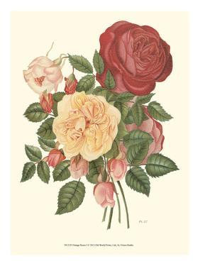 Vintage Roses I by Vision Studio