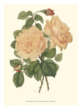 Vintage Roses III by Vision Studio