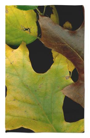 Vivid Leaves II by Vision Studio