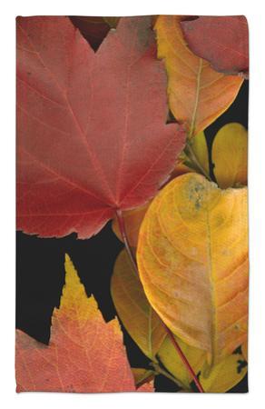 Vivid Leaves IV by Vision Studio