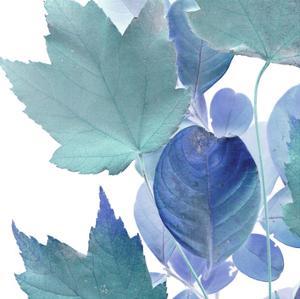 Xray Leaves IV by Vision Studio