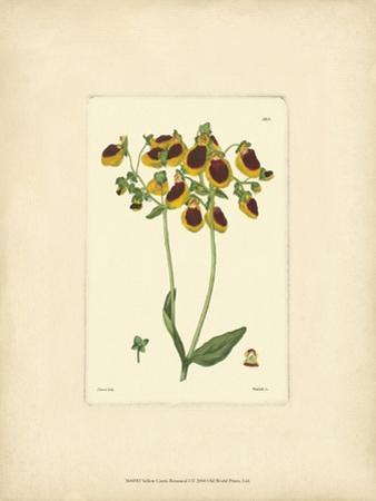 Yellow Curtis Botanical I by Vision Studio
