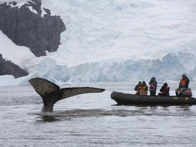 https://imgc.allpostersimages.com/img/posters/visitors-get-close-up-view-of-humpback-whales-in-cierva-cove-gerlache-strait-antarctic-peninsula_u-L-P58B9G0.jpg?p=0