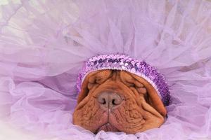 Chief Indian Dog Sleeping Sweetly by vitalytitov