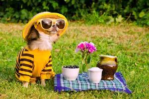 Chihuahua Picnic In Summer Garden by vitalytitov