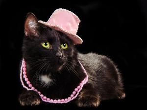 Glamorous Black Cat Wearing Pink Hat And Beads Against Black Background by vitalytitov