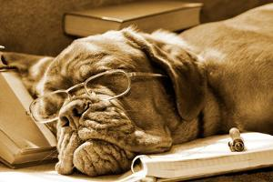 Tired Dog Sleeping At Her Lessons In Sepia Tone by vitalytitov