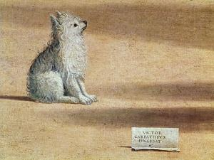 Vision of St. Augustine, Detail of the Dog, 1502-08 by Vittore Carpaccio