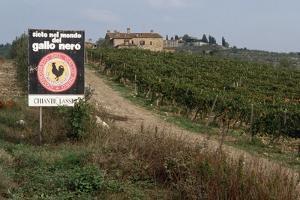 Vineyard in Tuscany by Vittoriano Rastelli