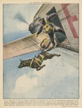Finnish Parachutist Jumps with His Dog by Vittorio Pisani