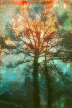 Abstract Forest by Viviane Fedieu Daniel