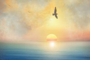 Bird by Viviane Fedieu Daniel