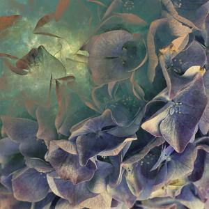 Dream of Petal by Viviane Fedieu Daniel