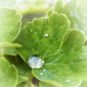 Drop of Rain by Viviane Fedieu Daniel