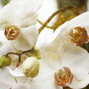 Dust Orchid by Viviane Fedieu Daniel