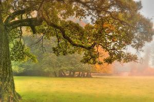 Foliage by Viviane Fedieu Daniel