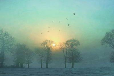 Frozen by Viviane Fedieu Daniel