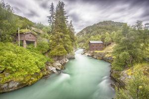 Green Nature by Viviane Fedieu Daniel