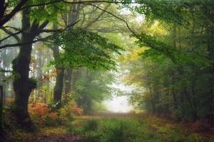 Green Peace by Viviane Fedieu Daniel
