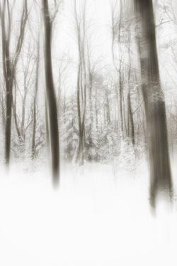 Heart of Ice by Viviane Fedieu Daniel