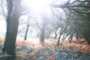 Light Is Coming by Viviane Fedieu Daniel