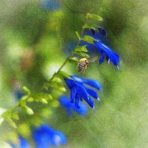 Love of Spring by Viviane Fedieu Daniel