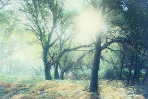Magic Light by Viviane Fedieu Daniel