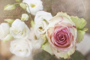 My Friend the Rose by Viviane Fedieu Daniel