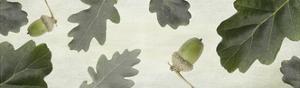 Oak by Viviane Fedieu Daniel