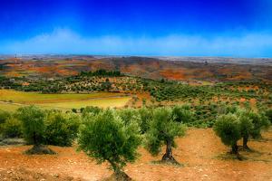 Olive Filed by Viviane Fedieu Daniel
