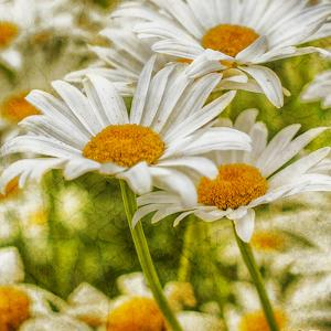 Power Flower by Viviane Fedieu Daniel