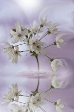 Reminiscence by Viviane Fedieu Daniel