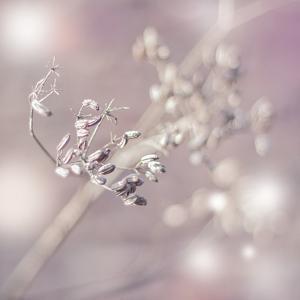 Seeds Of Life by Viviane Fedieu Daniel