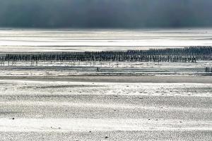 Silver Fish by Viviane Fedieu Daniel