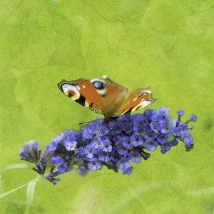 Spring Butterfly by Viviane Fedieu Daniel