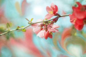 Spring Melody In Blue by Viviane Fedieu Daniel